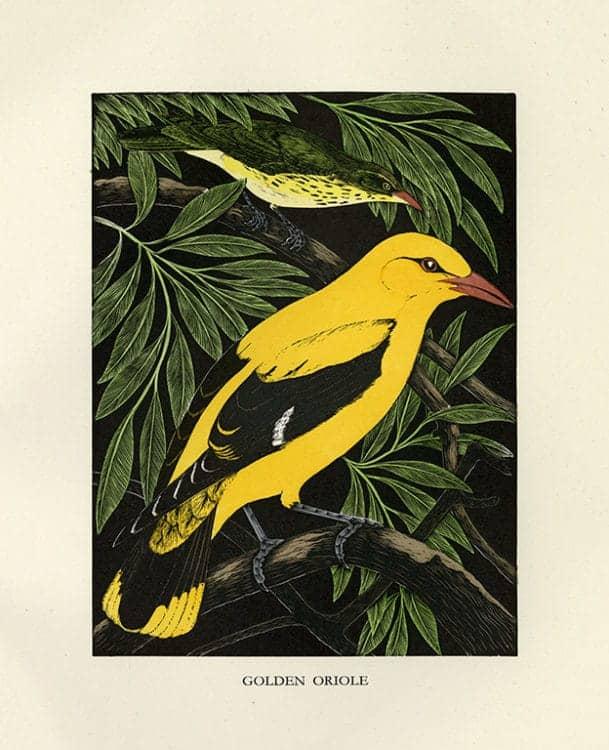 Daglish-Birds-BDB5 - Framed Artwork from Interior Elements, Eagle, WI
