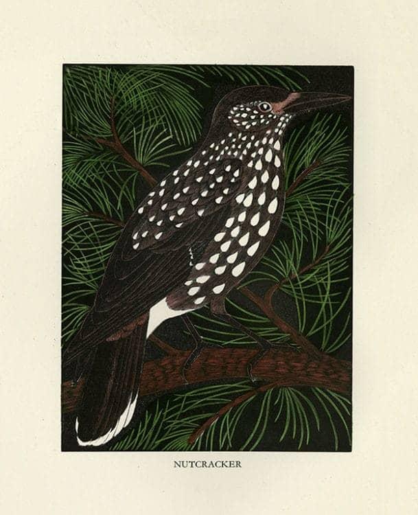 Daglish-Birds-BDB6 - Framed Artwork from Interior Elements, Eagle, WI
