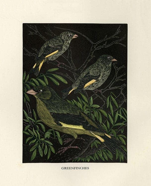 Daglish-Birds-BDB7 - Framed Artwork from Interior Elements, Eagle, WI