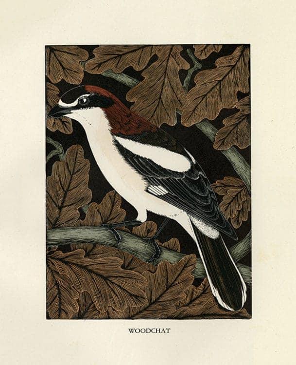 Daglish-Birds-BDB8 - Framed Artwork from Interior Elements, Eagle, WI