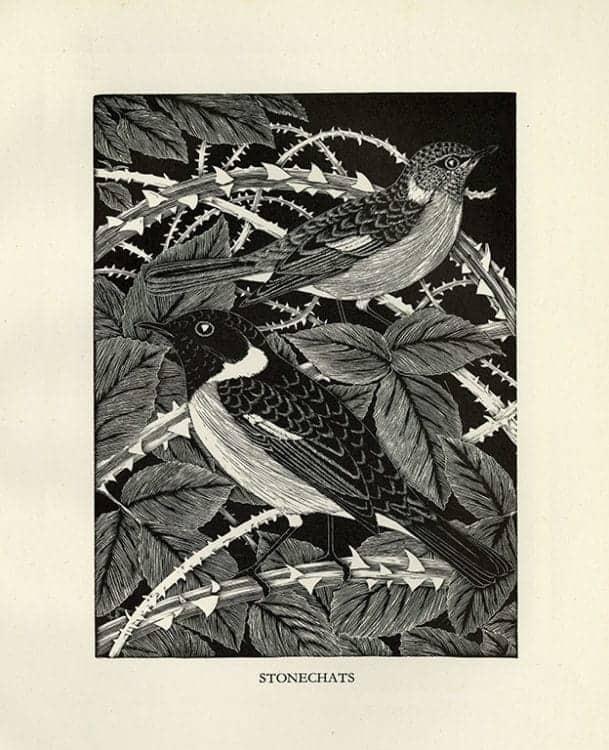 Daglish-Birds-BDBBW1 - Framed Artwork from Interior Elements, Eagle, WI