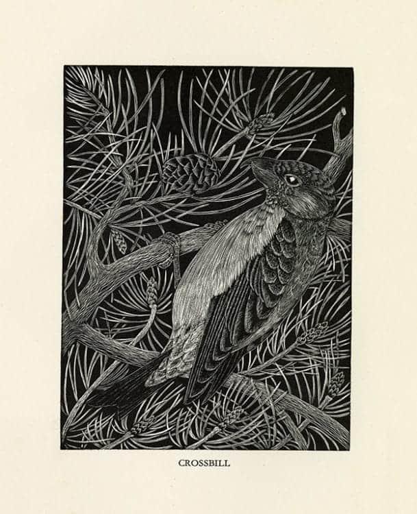 Daglish-Birds-BDBBW2 - Framed Artwork from Interior Elements, Eagle, WI