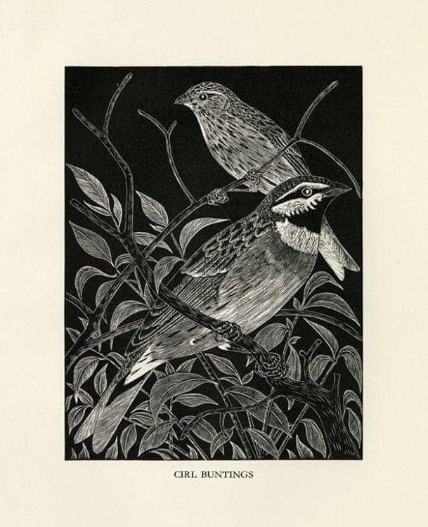 Daglish-Birds-BDBBW3 - Framed Artwork from Interior Elements, Eagle, WI