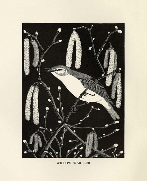 Daglish-Birds-BDBBW4 - Framed Artwork from Interior Elements, Eagle, WI
