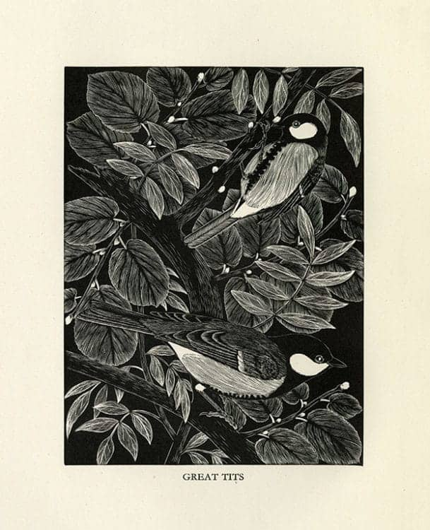 Daglish-Birds-BDBBW5 - Framed Artwork from Interior Elements, Eagle, WI