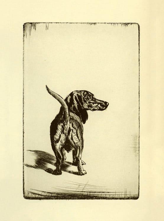 Diana-Thorne-Dogs-DT2 - Framed Artwork from Interior Elements, Eagle, WI