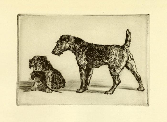 Diana-Thorne-Dogs-DT3 - Framed Artwork from Interior Elements, Eagle, WI
