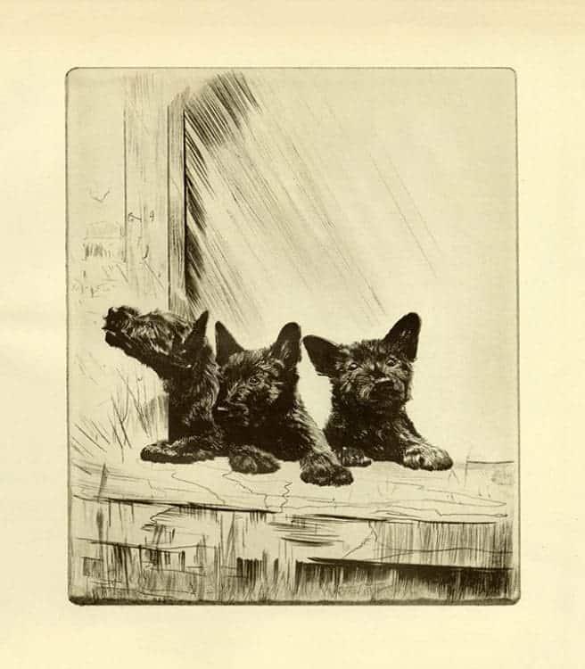 Diana-Thorne-Dogs-DT4 - Framed Artwork from Interior Elements, Eagle, WI