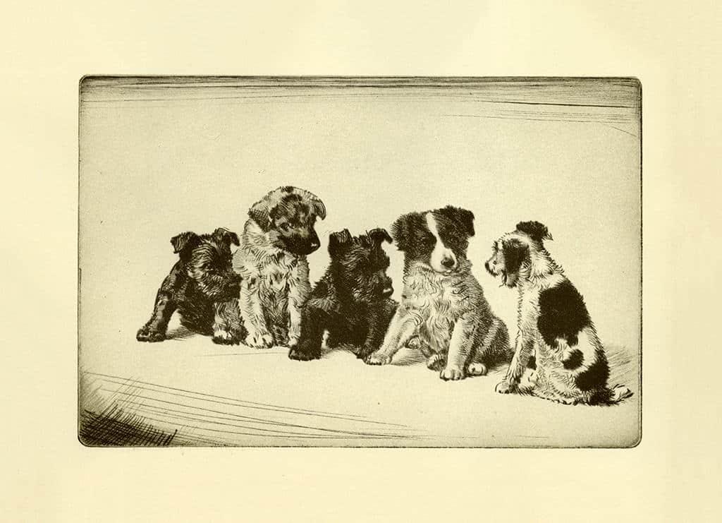 Diana-Thorne-Dogs-DT5 - Framed Artwork from Interior Elements, Eagle, WI