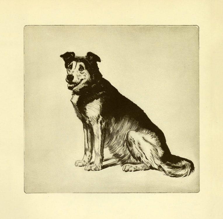 Diana-Thorne-Dogs-DT6 - Framed Artwork from Interior Elements, Eagle, WI