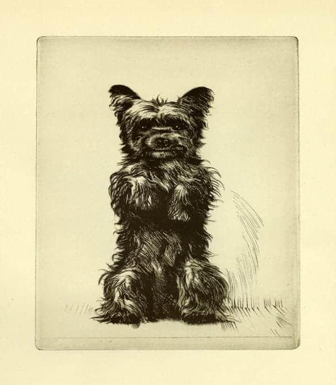 Diana-Thorne-Dogs-DT7 - Framed Artwork from Interior Elements, Eagle, WI