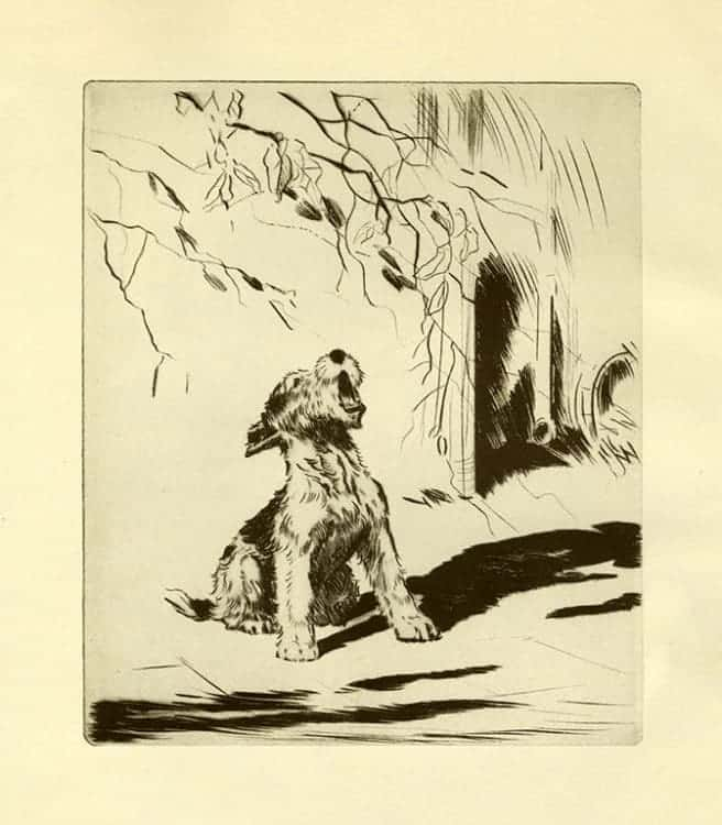 Diana-Thorne-Dogs-DT8 - Framed Artwork from Interior Elements, Eagle, WI