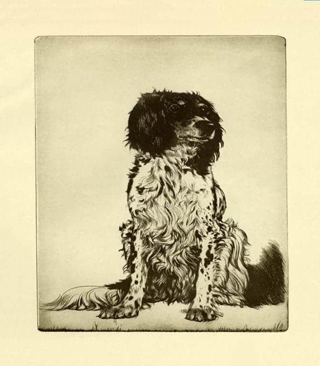 Diana-Thorne-Dogs-DT9 - Framed Artwork from Interior Elements, Eagle, WI