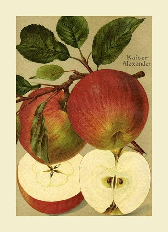 Fruit Apple FfFF10 - Framed Vintage Artwork from Interior Elements, Eagle WI