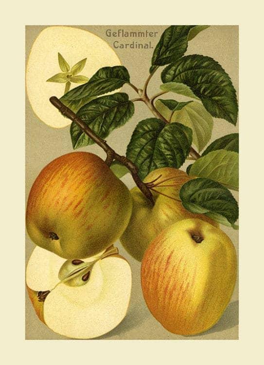 Fruit Apple FfFF7 - Framed Vintage Artwork from Interior Elements, Eagle WI