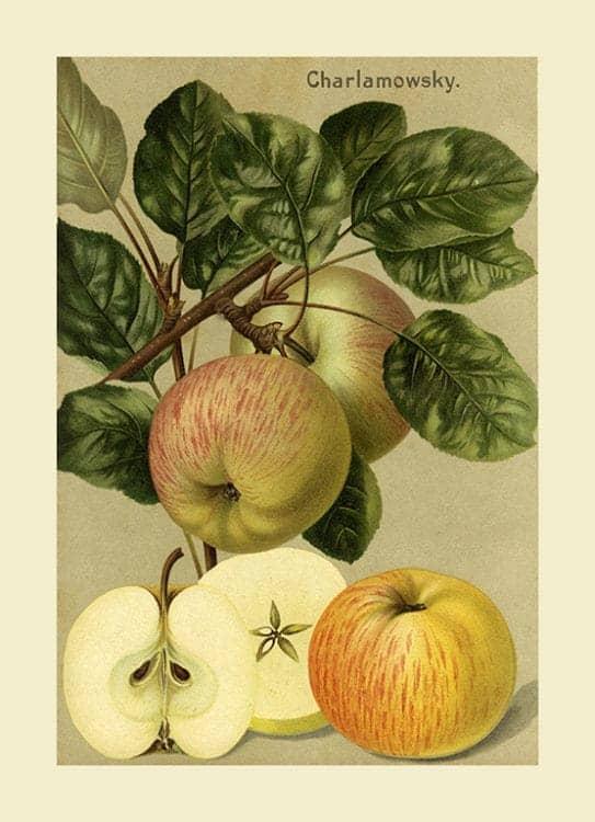 Fruit Apple FfFF8 - Framed Vintage Artwork from Interior Elements, Eagle WI