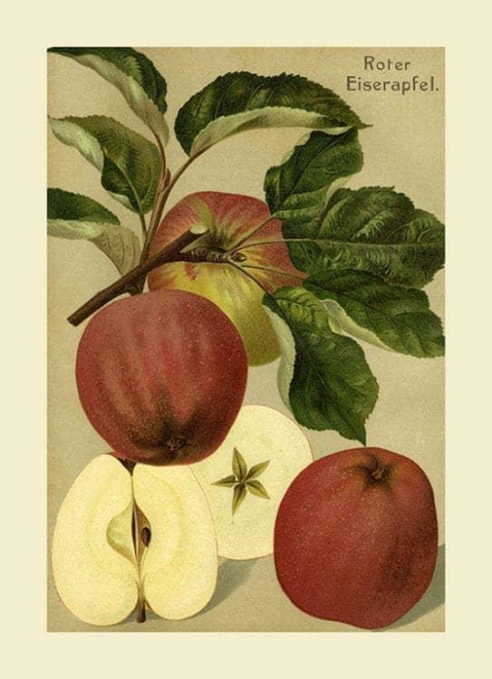 Fruit Apple FfFF9 - Framed Vintage Artwork from Interior Elements, Eagle WI