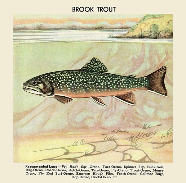 Fish-Brook-Trout-FishBT - Framed Vintage Artwork from Interior Elements, Eagle WI