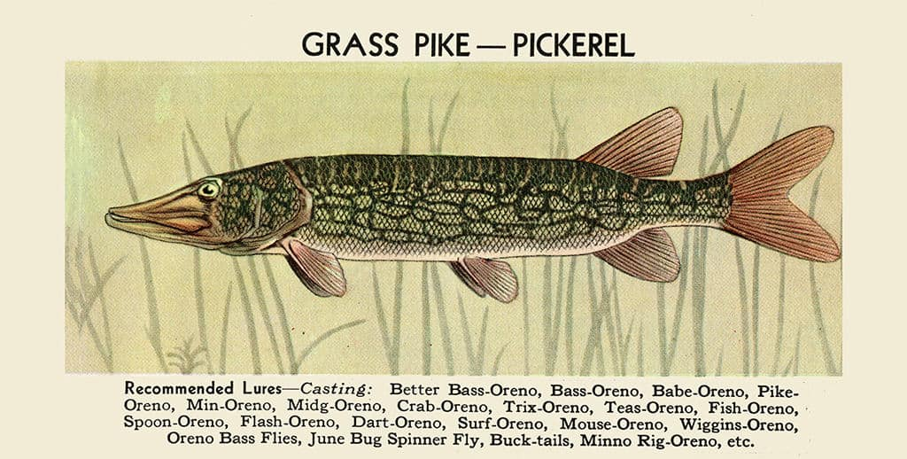 Fish-Grass-Pike-FishGP - Framed Vintage Artwork from Interior Elements, Eagle WI