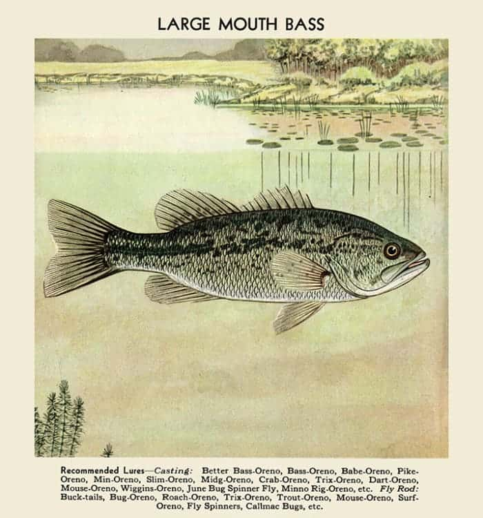 Fish-Large-Mouth-Bass-FishLMB - Framed Vintage Artwork from Interior Elements, Eagle WI