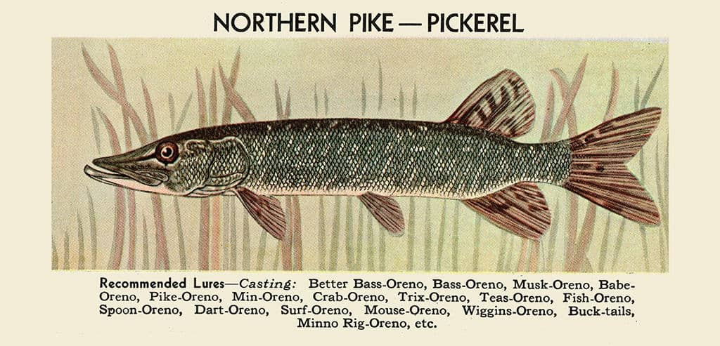 Fish-Northen-Pike-FishNP - Framed Vintage Artwork from Interior Elements, Eagle WI