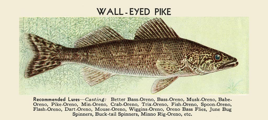 Fish-Walleye-Pike-FishWP - Framed Vintage Artwork from Interior Elements, Eagle WI