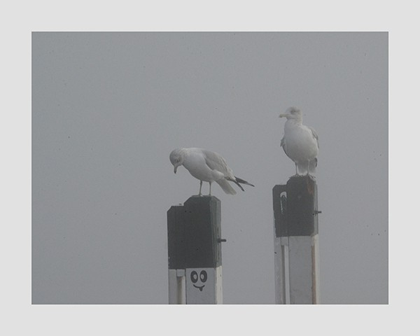 Fontana-Seagulls-Photo-CL6 - Framed Photography / Artwork from Interior Elements, Eagle WI