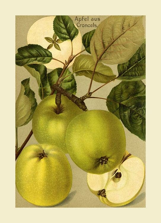 Fruit-Apple-FfFF11 - Framed Vintage Artwork from Interior Elements, Eagle WI