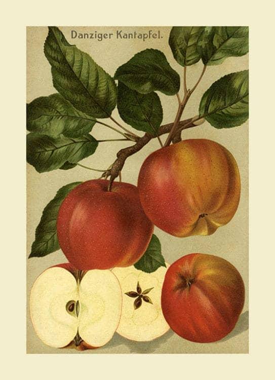 Fruit-Apple-FfFF12 - Framed Vintage Artwork from Interior Elements, Eagle WI