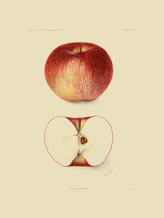 Fruit-Apple-FrA1 - Framed Vintage Artwork from Interior Elements, Eagle WI