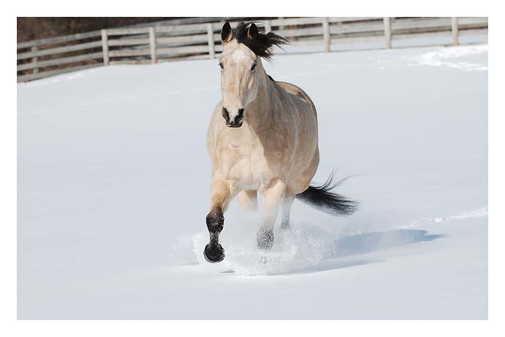 Horse-in-Snow-Photo-CL7 - Framed Photography / Artwork from Interior Elements, Eagle WI