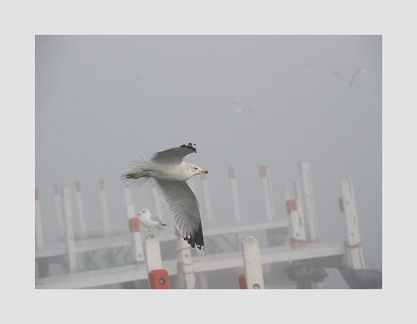 Seagull-Photo-CL17 - Framed Photography / Artwork from Interior Elements, Eagle WI