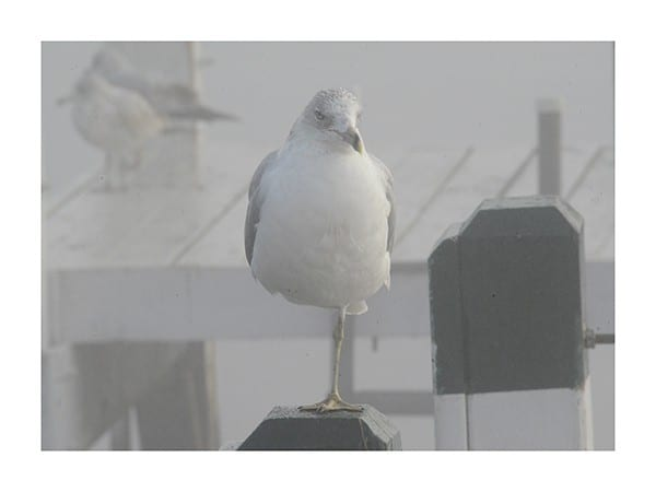Seagull-Standing-Photo-CL29 - Framed Photography / Artwork from Interior Elements, Eagle WI
