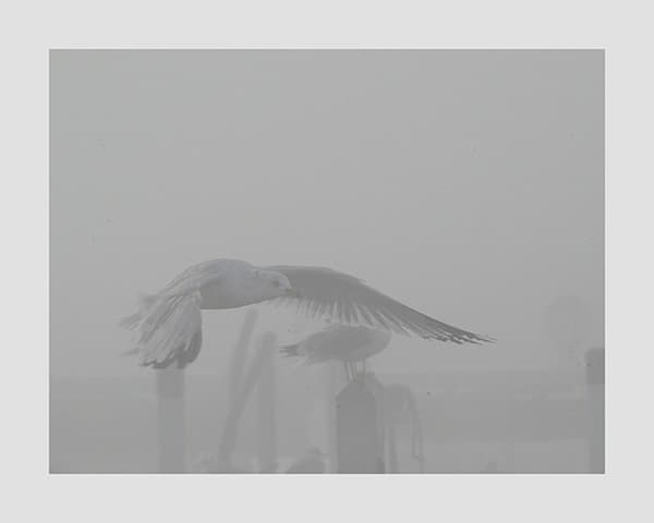 Seagull-in-Flight-Photo-CL19 - Framed Photography / Artwork from Interior Elements, Eagle WI