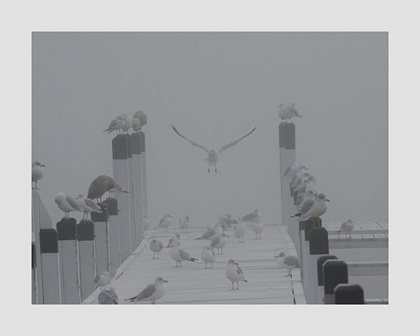 Seagulls-on-Pier-Photo-CL20 - Framed Photography / Artwork from Interior Elements, Eagle WI