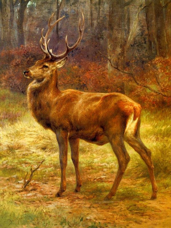 Deer 2 36x48 Framed Artwork from Interior Elements, Eagle WI