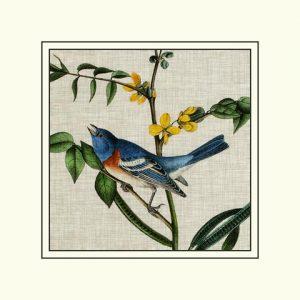 Avian Crop VIII