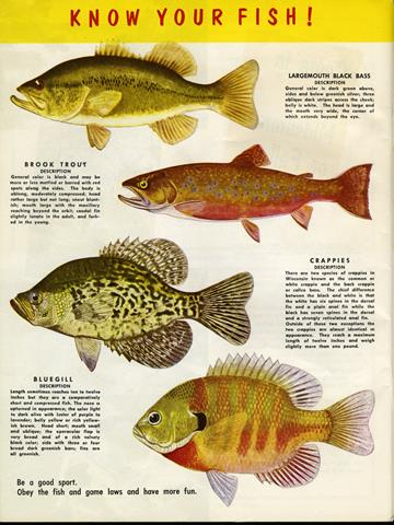 fish diagram ii: know your fish
